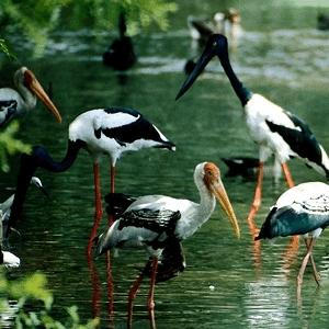 Kanwar Lake Bird Sanctuary In Begusarai, Bihar