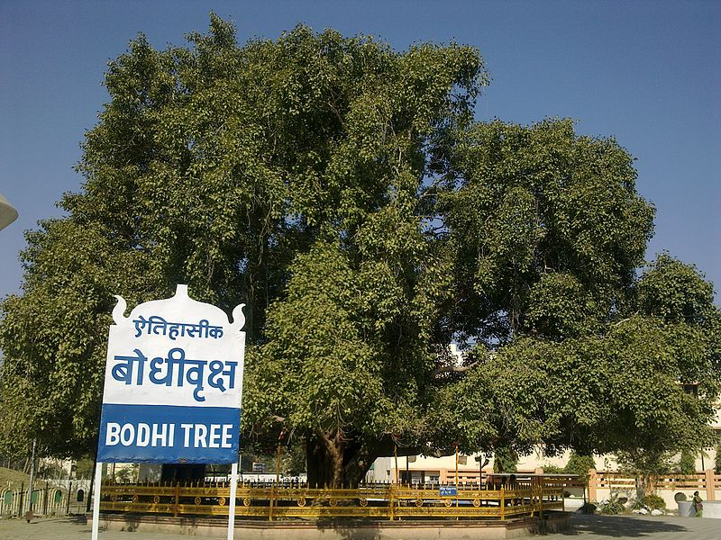 Diksha Bhumi In Nagpur-Bodhi Tree